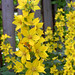 Dotted Loosestrife - Photo (c) Per Ola Wiberg, some rights reserved (CC BY)