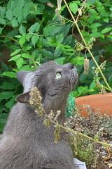 Artemis with the catnip