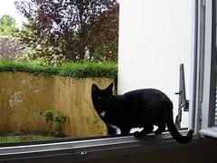 Moumoune sur le bord de la fenêtre, à Chilly