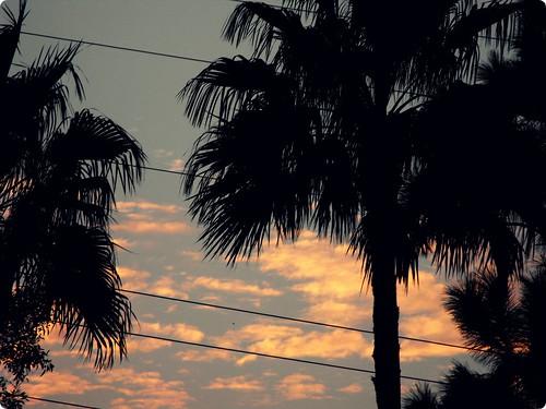 sunset palmtree