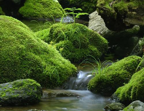Du japon dans un jardin mousse vu sur flickr - Jardin japonais mousse ...