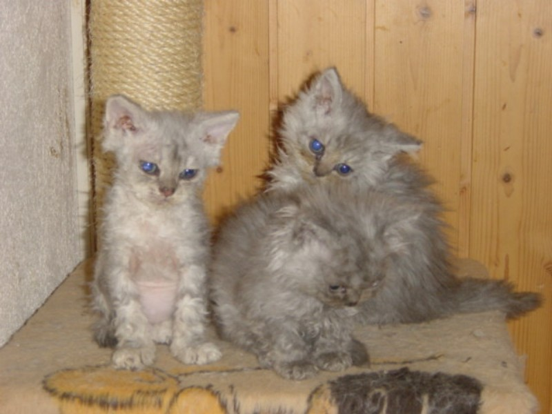 Baby Gr�gu and his sister/brother