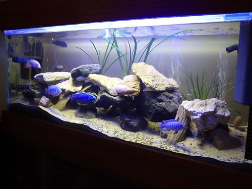 Antes de poner un acuario considerar taringa for Como hacer una laguna artificial para peces