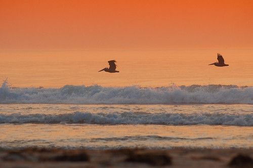 ocean sunrise waves northcarolina outerbanks obx nikond90 beachpelican