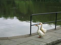 Ducks enjoying the scenery