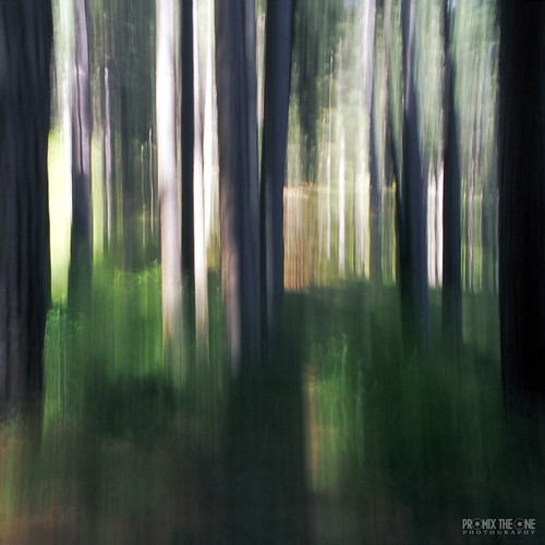 alberi calabria bosco mosso pini contaxrtsiii zeisst2885f334 loricacs