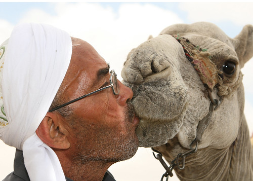A man kisses a camel in Egypt.