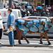 Cow parade : incognito ©mildiou