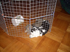 dog crate(0.0), floor(1.0), cage(1.0), pet(1.0), animal shelter(1.0),