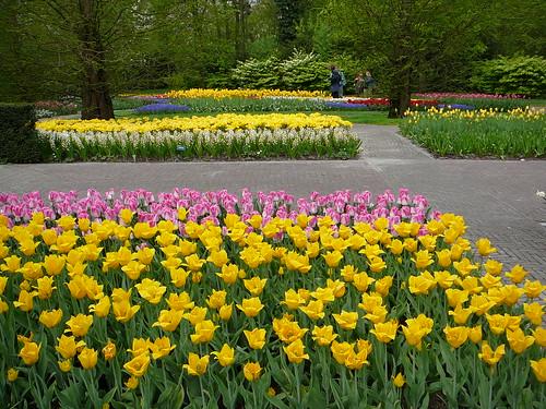 Tulipanes cuidados del jard n - Jardines de tulipanes en holanda ...