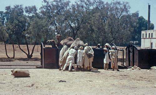 africa geotagged rail camel libya fwjefferies azizia alaziziyah geo:lat=32538709 geo:lon=1297554