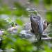 Stalking the Great Blue Heron