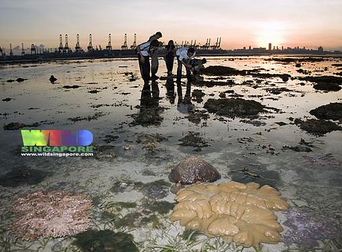 Living reefs of Cyrene at sunrise