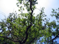 Blätter im Sommer 2007
