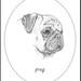 XXIII Dog Drawings