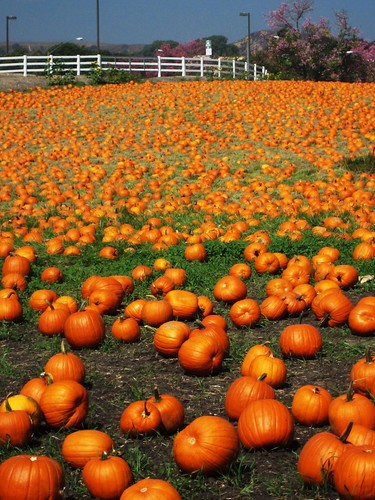 this weekend in wisconsin  fall train rides  pumpkin patch