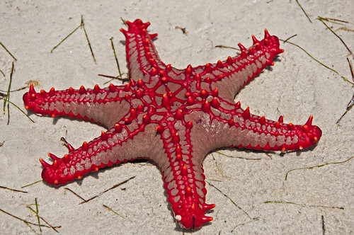 Red star on the beach