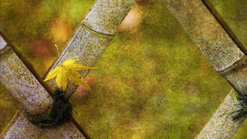 Leaf Zen V