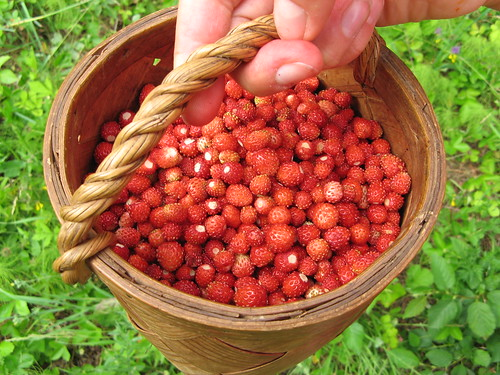 A litre of delicious wild strawberries / Liiter metsmaasikaid