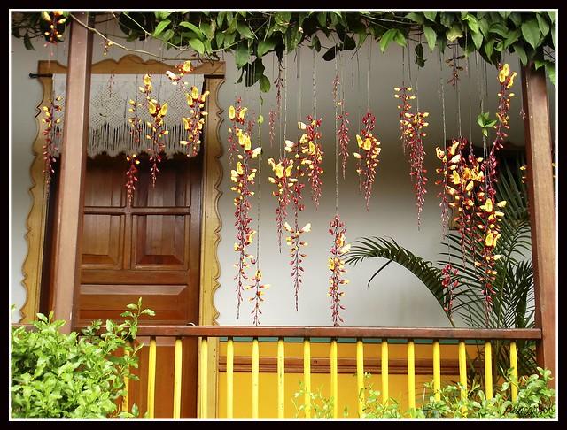 Hacienda Cafetera, Sony DSC-W17