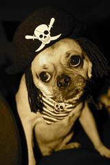 a sad pirate
