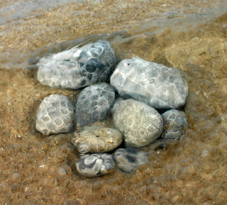 petoskey stones on the beach2