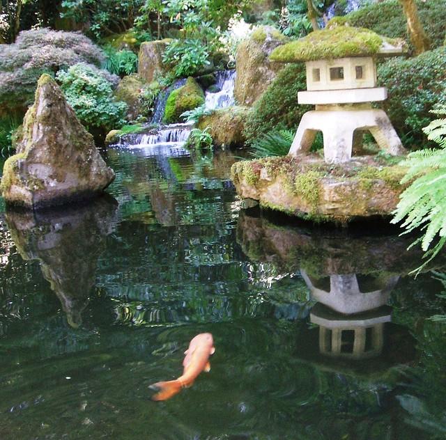 Japanese gardens flickr photo sharing for Koi farm near me