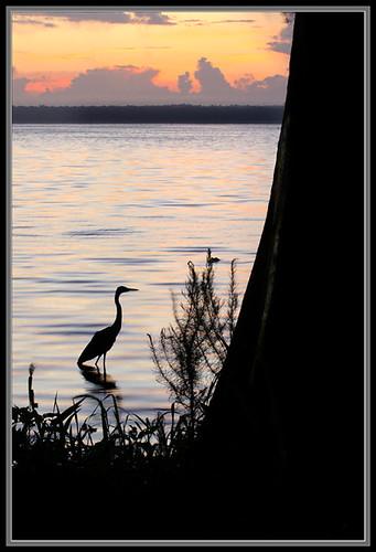 nature sunrise florida scenic newnanslake alachuacounty palmpointpark lakepithlachocco