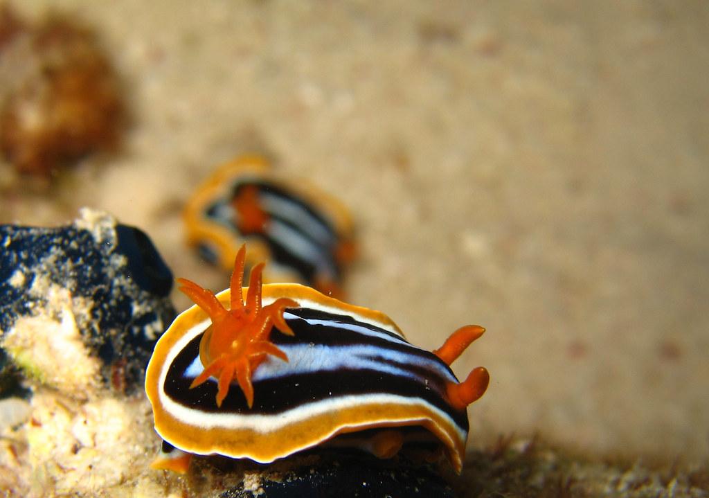 Picssr fish eye 39 s most interesting photos for Fish eye fun