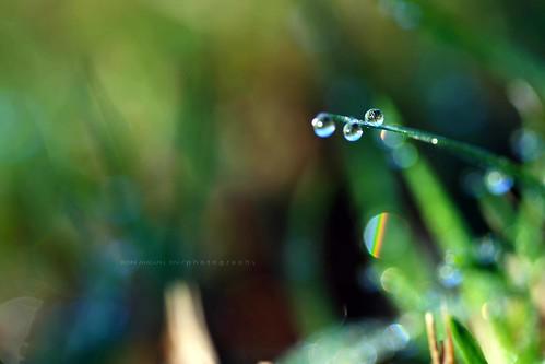 macro waterdrops 100mmlens eos400d canonrebelxti rmphotography ronmiguelrnphotography
