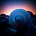 snail shell by wanderlustcameras