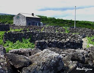 Currais, Pico Island, Azores