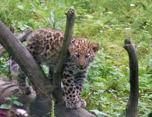 Leopard Learning