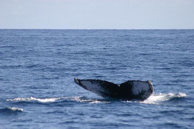 Header of balena