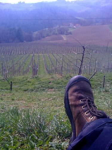 Looking over the vineyards in Slatina, Slovenia (outside of Maribor)