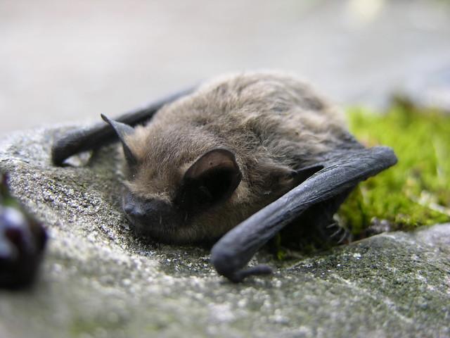 Chcete prožít den s netopýry? Přijďte na Chlum