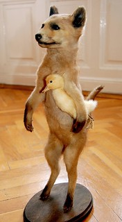 Vintage Fox and Duck Taxidermy