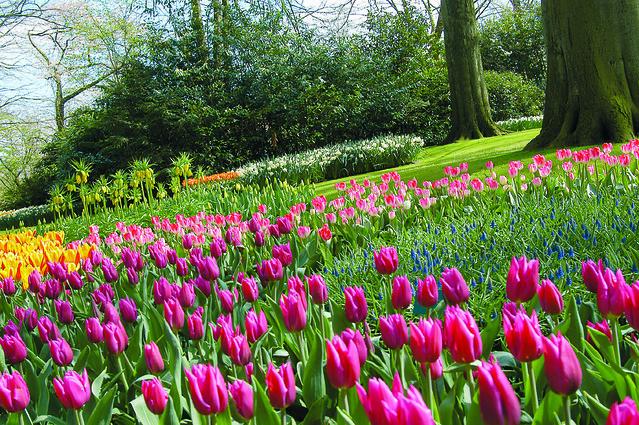 Keukenhof Tulip Gardens Tour Amsterdam Flickr Photo