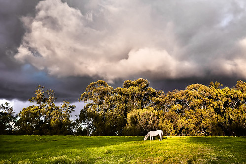 sunset sky horse white clouds landscape hawaii atmosphere maui pasture olinda upcountry haleakalaranch