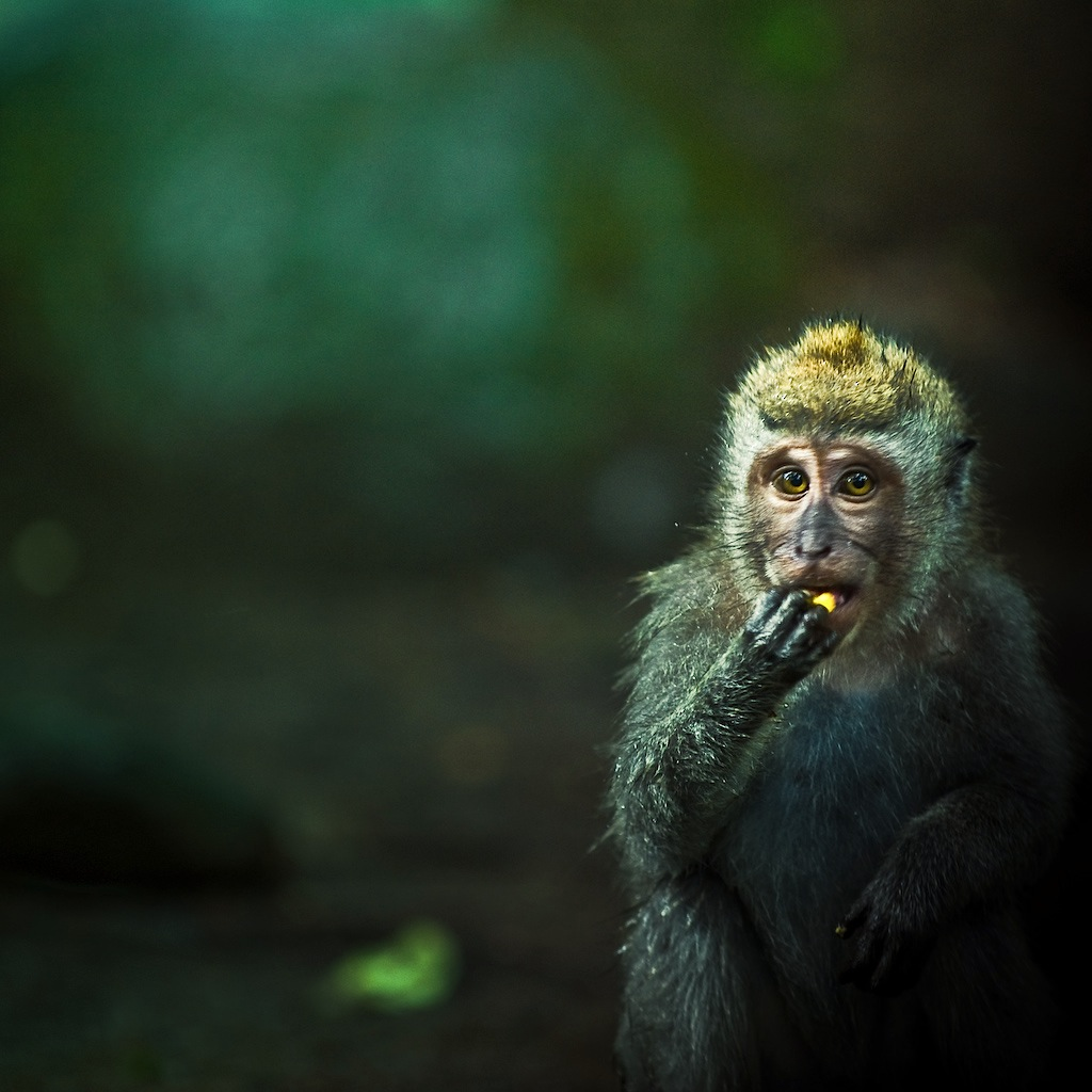 Nature / Animal / Monkey