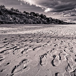 Usedomer Strandläufer