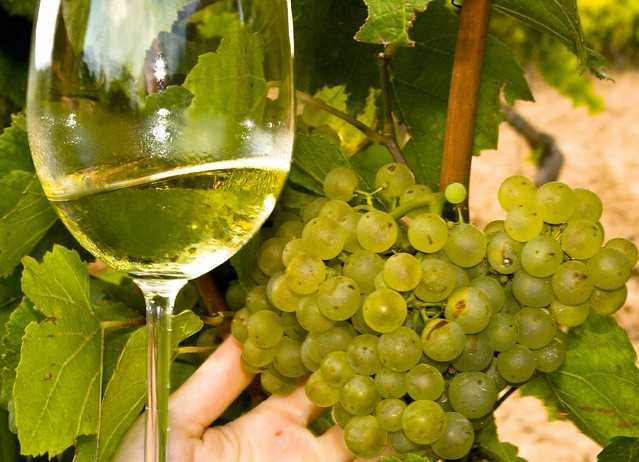 Винодельня в Испании