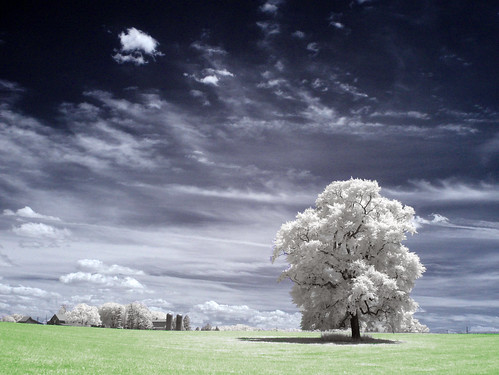 trees wallpaper usa tree landscape ir arbol træ maryland boom árbol infrared 木 风景 albero tre puu coolest arbre árvore strom baum träd 树 infravermelho 壁纸 ツリー 樹 r72 copac infrarot 红外 mytree дерево naturesfinest drzewo 나무 شجرة stablo infrarrojos 赤外線 红外线 supershot infrapuna infrarood infrarouge дърво infrarossi δέντρο 紅外線 aplusphoto f717ir инфракрасный inframerah אינפראאדום 紅外 पेड़ वृक्ष पेड infravörös 樹樹 infračervené 적외선 υπερύθρων अवरक्त 적외선의 柅 柂