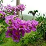 Hình ảnh của Flower Forest gần Hillaby. flower barbados bathsheba flowerforest