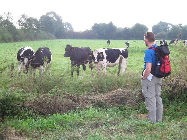 Shane meet cow...