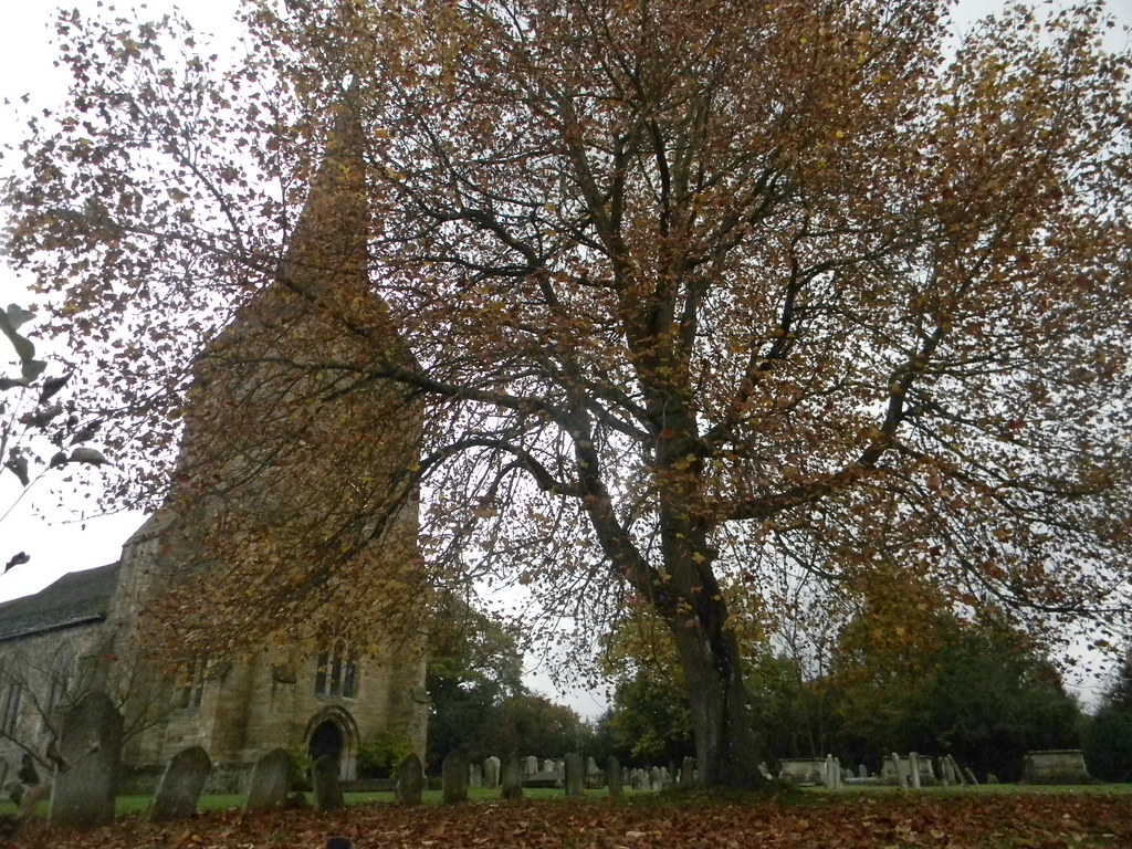 Hartfield Church...and tree Ashurst short circular