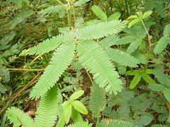 shrub(0.0), flower(0.0), tree(0.0), ostrich fern(0.0), ferns and horsetails(0.0), vascular plant(1.0), leaf(1.0), plant(1.0), flora(1.0), vegetation(1.0),