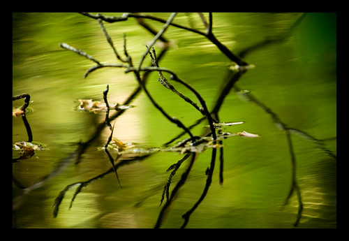 park newyork reflection green water leaves canon sticks pond ripple explore dslr vignetting hartsdale twigs westchester waterreflection 70200mm ef70200mm canonef70200mmf28lusm hartsdaleny westchesterny canon70200f28l westchesternewyork 70200mmf28 xti 400d nrbelex hartsdalenewyork