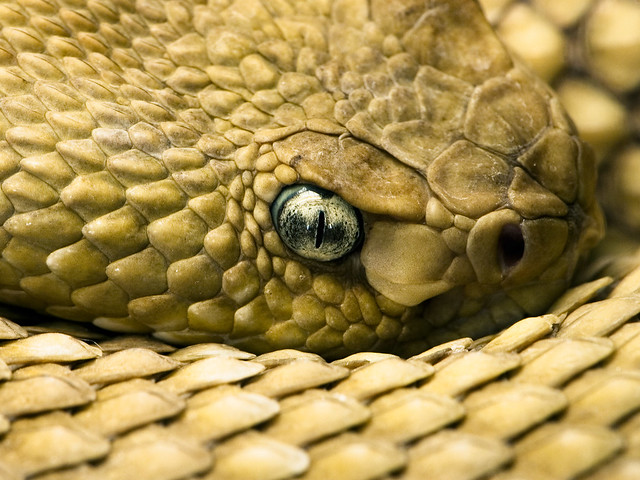 Close Up Photo of a Snake using the Canon D500 Lens