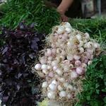 Fresh Herbs at Telavi Market - Kakheti, Georgia